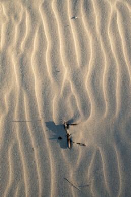 Ochtendlicht schijnt over golvende zandribbels in een stuifkuil van het Noordhollands Duinreservaat bij Bergen aan Zee