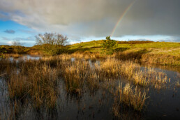 Dreigende wolkenlucht en regenboog boven een natte duinvallei in de Tjalkhoek in de Schoorlse Duinen