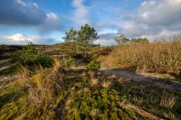 Struweel, naaldbomen en met mossen bedekte duintjes in de Tjalkhoek in de Schoorlse Duinen
