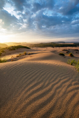 Zandribbels op stuifduin worden opgelicht door het warme licht van een zonsopkomst in het Nationaal park Zuid-Kennemerland.