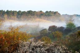 Laagjes mist hangen tussen de rijk begroeide duinhellingen tijdens zonsopkomst in het Noordhollands Duinreservaat bij Egmond-Binnen