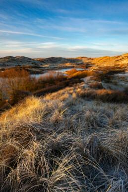 Berijpt helmgras na een koude nacht in het Noordhollands Duinreservaat bij Egmond aan Zee